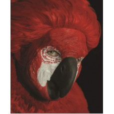 Mask Face of a Parrot